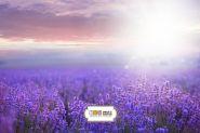 "Фон стена "" Lavender"""